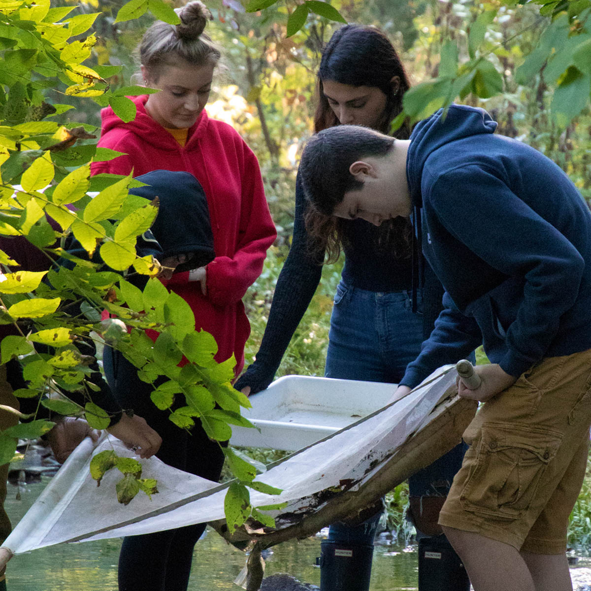 Students collecting materials from a stream for research.